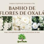 Banho de flores de Oxalá para limpeza espiritual e pacificação do espírito