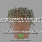 Sua planta murchou de repente após uma visita? O que sua planta está dizendo?