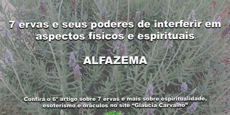 7 ervas e seus poderes de interferir em aspectos físicos e espirituais-ALFAZEMA