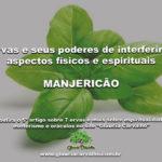 7 ervas e seus poderes de interferir em aspectos físicos e espirituais- MANJERICÃO
