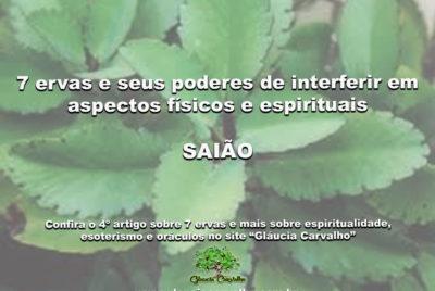 7 ervas e seus poderes de interferir em aspectos físicos e espirituais- SAIÃO