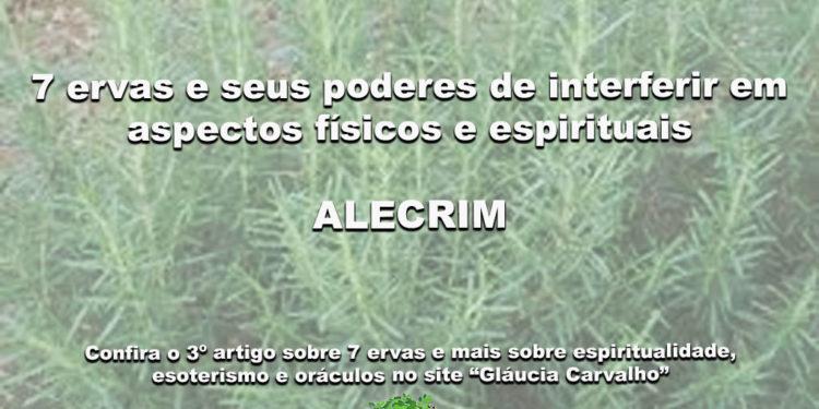 7 ervas e seus poderes de interferir em aspectos físicos e espirituais- ALECRIM