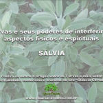 7 ervas e seus poderes de interferir em aspectos físicos e espirituais- SÁLVIA