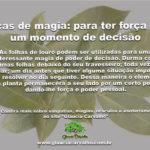 Dicas de magia: folhas de louro para ter força em um momento de decisão