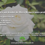 Confira um banho de Rosa Branca para proteção