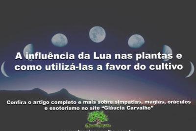A influência da Lua nas plantas e como utilizá-las a favor do cultivo