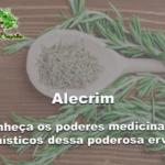 Alecrim: Conheça os poderes medicinais e místicos dessa poderosa erva