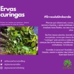 Ervas Curingas na Umbanda – Alecrim, Hortelã e Manjericão