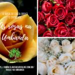 As rosas na Umbanda – Presença nos cultos de vários orixás e entidades