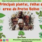 Principais plantas, folhas e ervas do Pretos Velhos